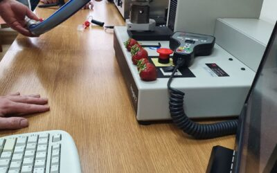 RESEARCH AND DEVELOPMENT WORK CARRIED OUT WITHIN THE INNOVATION INCUBATOR 2.0 – STRAWBERRY PICKING DEVICE
